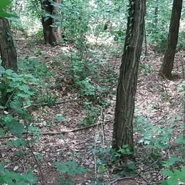 Eliminato il bivacco nel bosco  Olgiate, ma i furti continuano ancora