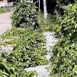 Maslianico, strada da pulire  La Provincia: «Interventi entro luglio»