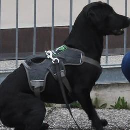 Cani antidroga a Cantù  Controlli nei parchi