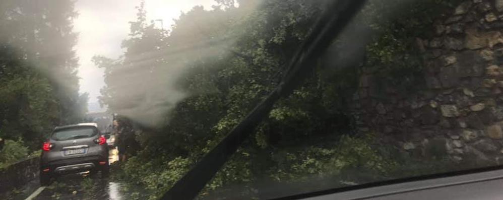 Forte temporale sul lago  Pianta caduta sulla Regina