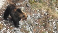 Libertà e felicità  La metafora dell'orso