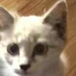 Gettata nel tunnel di Cernobbio  Ora la gattina ha una nuova casa   Qui il video della cucciola