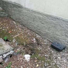 Rifiuti abbandonati a Olgiate  Allarme topi davanti al Comune