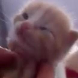 Grandate: gattino nei rifiuti  È caccia a chi lo ha gettato