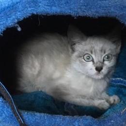 Cani e gatti abbandonati  Già 34 casi ad agosto