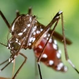 Zanzare: in un anno   435 mila morti