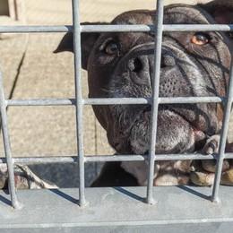 Cinquanta cani abbondanti al mese  «È una vera e propria emergenza»