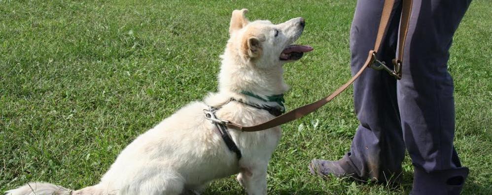 """Cani, imparare aiuta  Arriva il """"patentino""""  I corsi all'Insubria"""