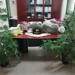 Canzo, 11chili di marijuana  Arrestato dai carabinieri