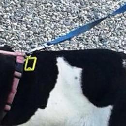 Senna, ha in braccio la figlia  Un cane libero aggredisce il suo