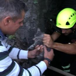 Gattino cade nel canale  Salvato dai Vigili del fuoco