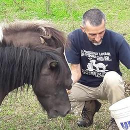 """Javier Zanetti """"vince""""  la gara di solidarietà  I due pony trovano casa"""