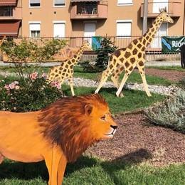 Non c'è pace per il palio di Mozzate  Scomparso il cucciolo di giraffa