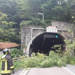 Maltempo, albero cade sulla Regina  Vigili del fuoco impegnati in  15 interventi