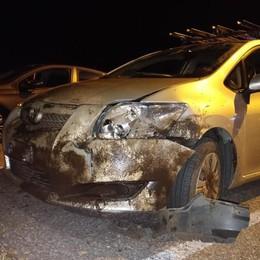 Colverde, incidente con i cinghiali  Danneggiata un'automobile