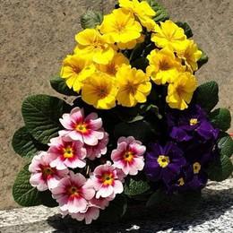 Furto al cimitero di Brenna  Spariti i fiori del compleanno di papà
