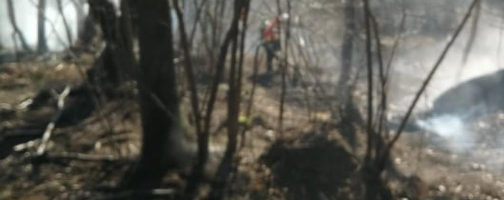 Incendio a Blessagno,   distrutti 4 ettari di bosco