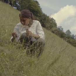 Ortica e  pimpinella  L'esperienza del foraging  per i turisti sul Lario