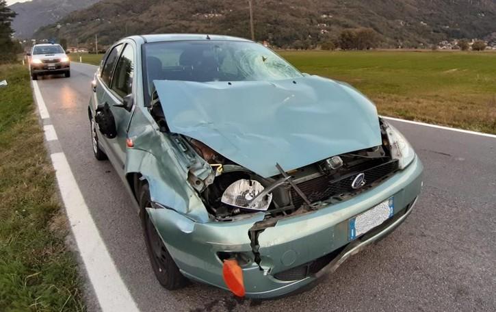 Sorico, pericolo per  300 cervi in libertà  Autovelox e multe alle auto troppo veloci