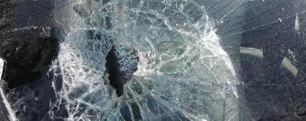 Gattino ucciso a bastonate  e danni all'automobile