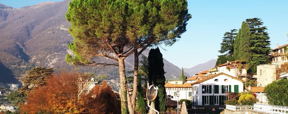 Petizione per salvare i pini di Torno  «Storia cancellata dai parcheggi»