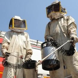 Porlezza, troppe zanzare a novembre  Il Comune ordina la disinfestazione