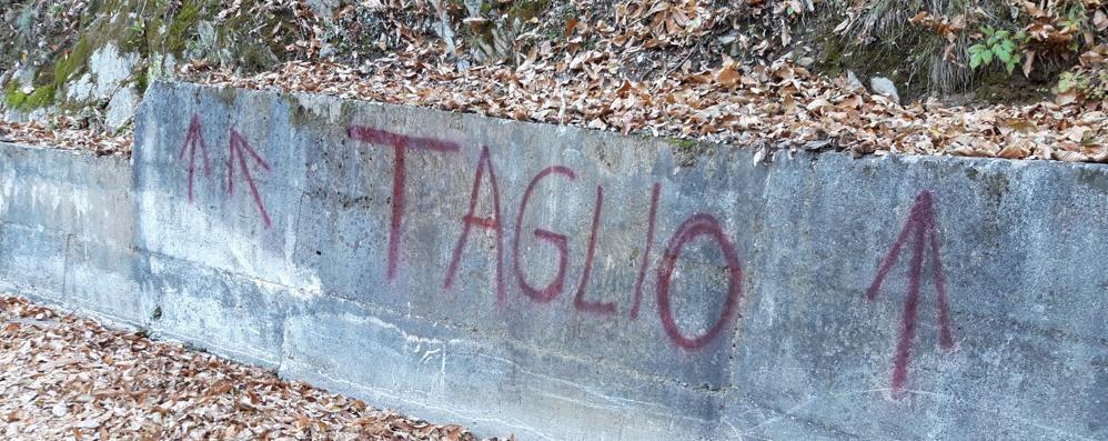 """""""Taglio alberi"""" con lo spray rosso  «Che tristezza i muri imbrattati»"""