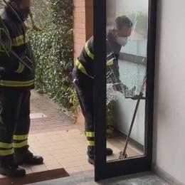 Paura in un condominio a Faloppio  Cinghiale a spasso sfonda l'ingresso