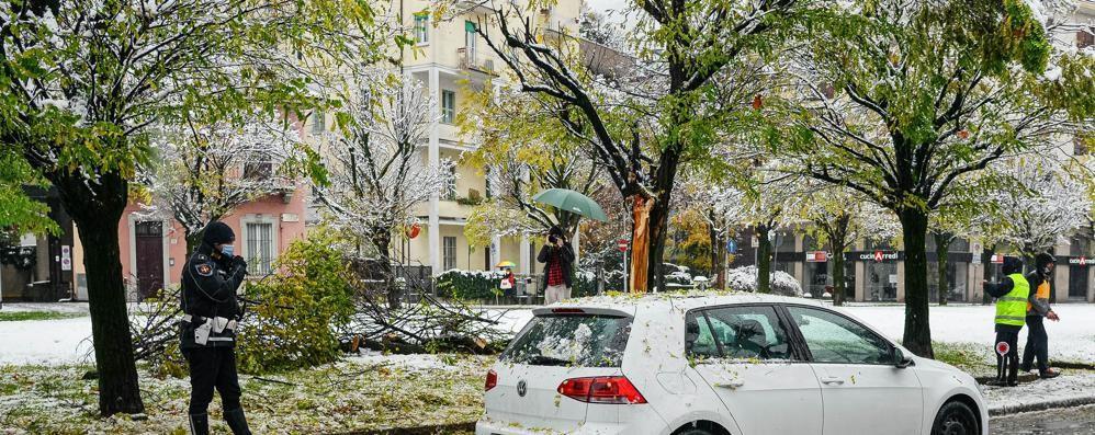 Albero si spezza per la neve e finisce contro un'auto