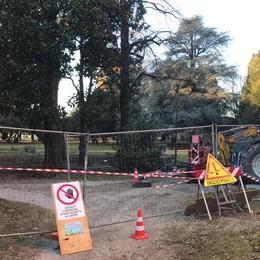 Piano verde da 900mila euro  Olgiate, giù gli alberi malati