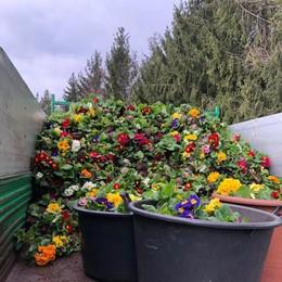 Coronavirus, le imprese  Montagne di fiori  finiscono tra i rifiuti