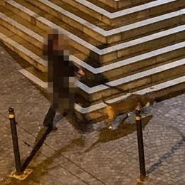 Il suo cane sporca fuori da scuola  Multa da 160 euro grazie al video