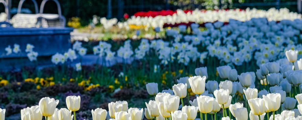 Verde e fiori, operai in azione  «Troverete una città più bella»