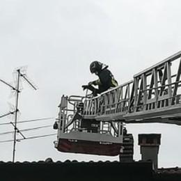 Canna fumaria in fiamme I vigili del fuoco a Cantù