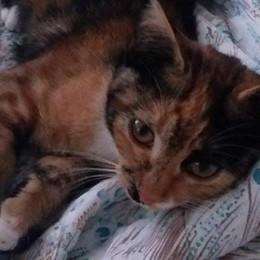 Gatto avvelenato con l'antigelo  È il secondo caso in due mesi
