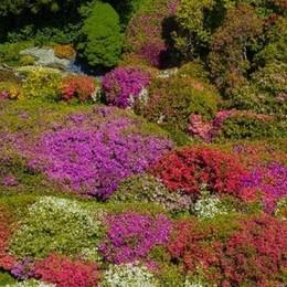 «Adotta una pianta»  Così Villa Carlotta  chiama a raccolta