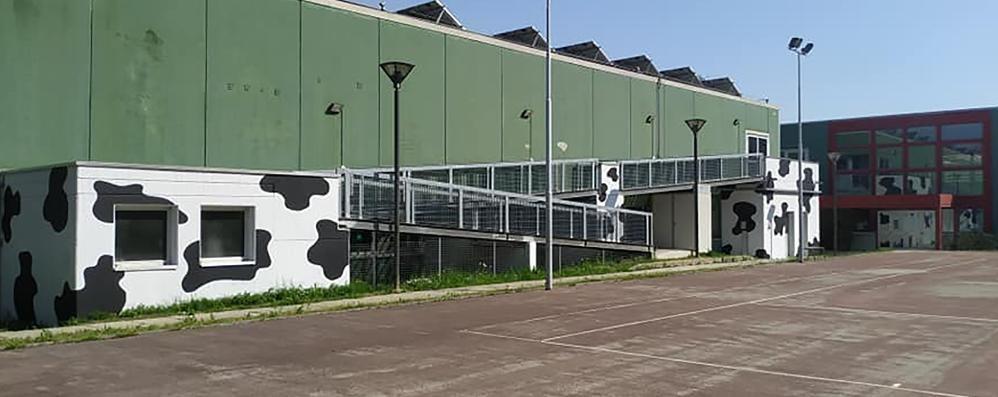 Lambrugo, macchie bianche e nere  I colori di una mucca sulla palestra