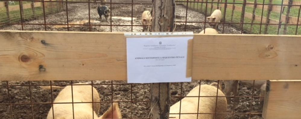 Fattoria delle coccole a processo  «Gli animali erano abbandonati»
