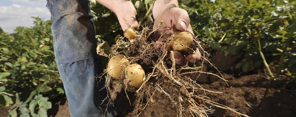Ok Ue ad aiuti di Stato per aziende agricole italiane