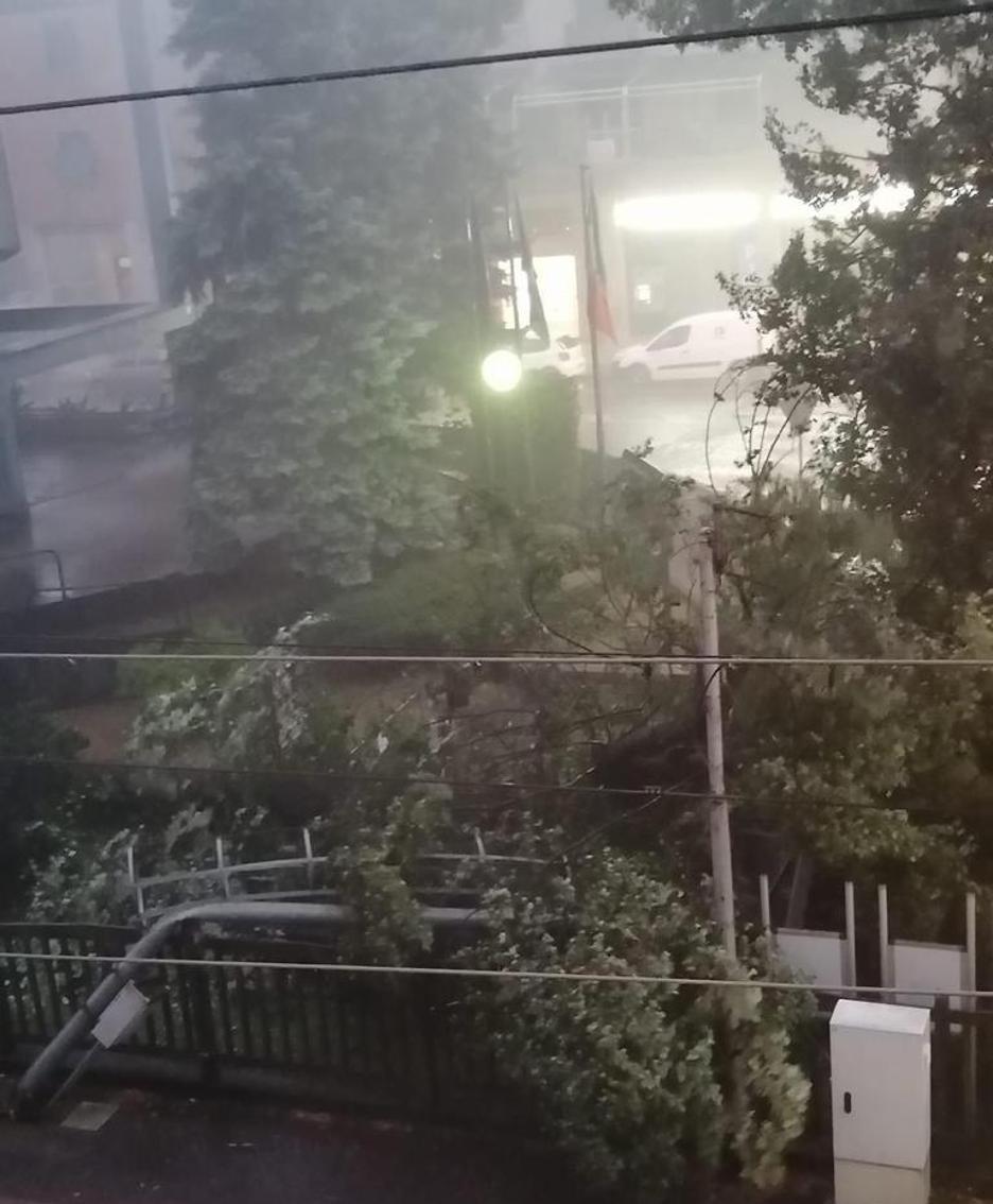 L'albero crollato sulla linea elettrica