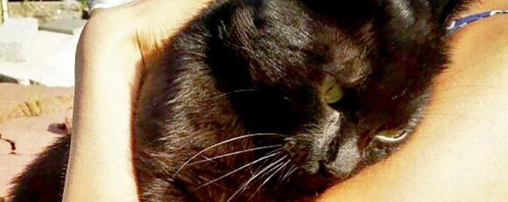 Alserio, sparano e feriscono il gatto Pepe  «Volevano uccidere, gesto da criminali»