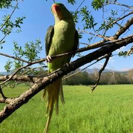 Il pappagallo del mago  sparisce davvero   Prima dello spettacolo per i bambini