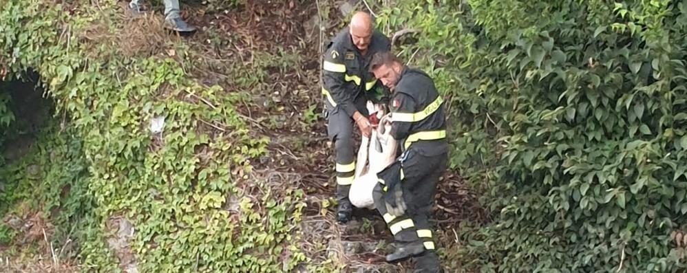 Capretta prigioniera  nella rete paramassi  Arrivano i pompieri