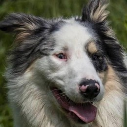 Passeggiata per Sturn,  il cane ucciso in Svizzera  perché abbaiava troppo