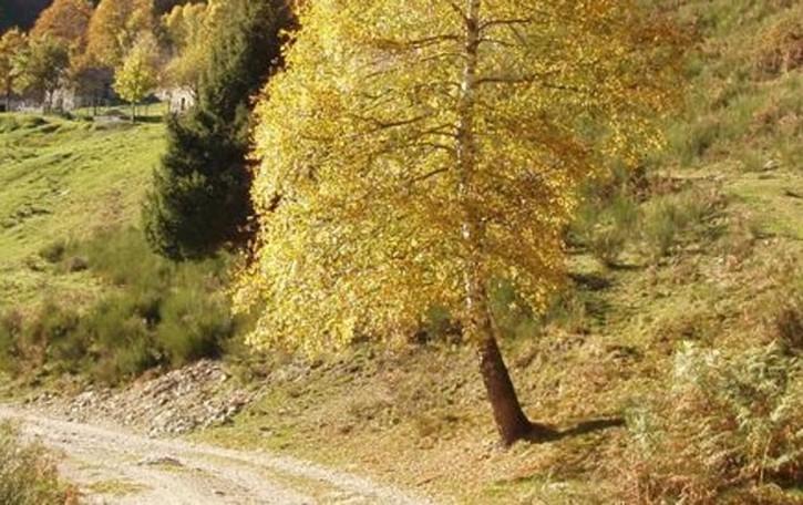 Val Sanagra, pedaggio   per chi cerca funghi