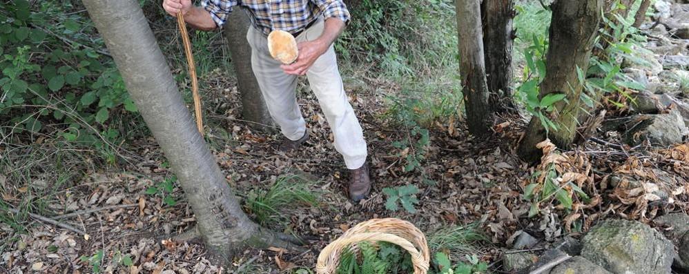 Troppe imprudenze nei boschi  «Non si può morire per qualche fungo»