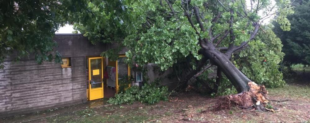 Bufera con vento e grandine  Olgiate, albero cade sull'asilo