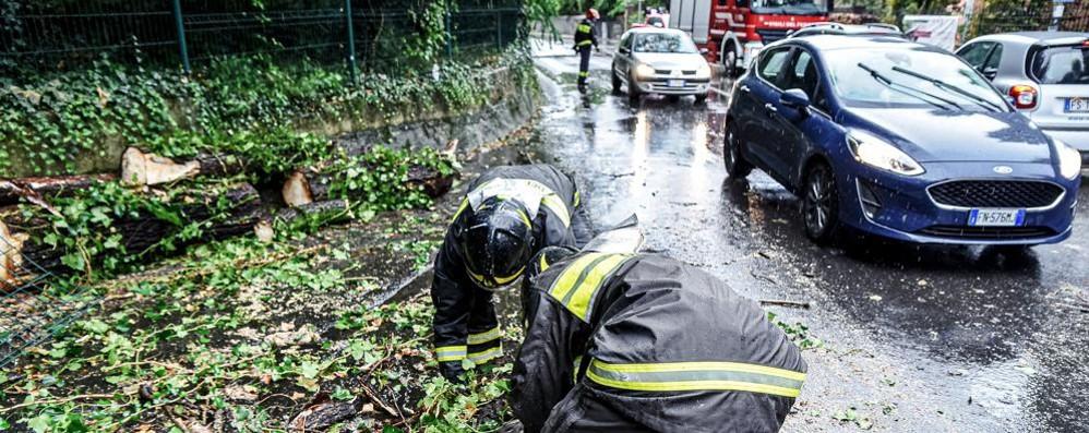Tempesta tropicale in città Alberi sradicati e allagamenti