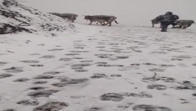 Transumanza sotto la neve