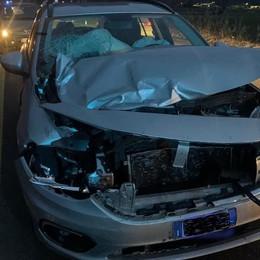 Cervi sulla strada,   altri due incidenti